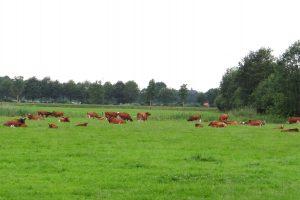 De boer op in Twente