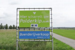 Polderknoflook