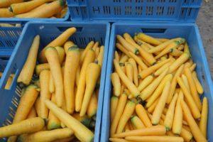 Kleurrijke vergeten groenten uit de Flevopolder