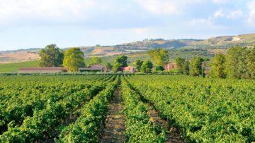 Italiaanse wijnen van Villa Fattoria
