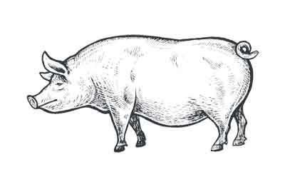 Verschillende soorten varkensvlees