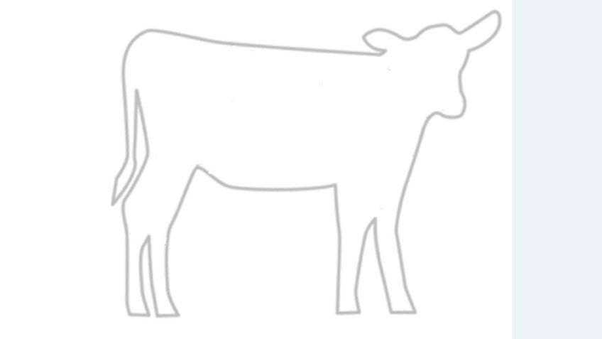 Eet jij wel eens kalfsvlees?
