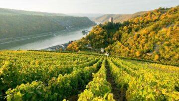 Duitse wijnen
